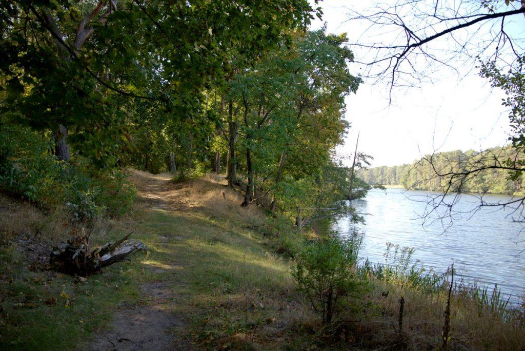 leśne nabrzeże jeziora