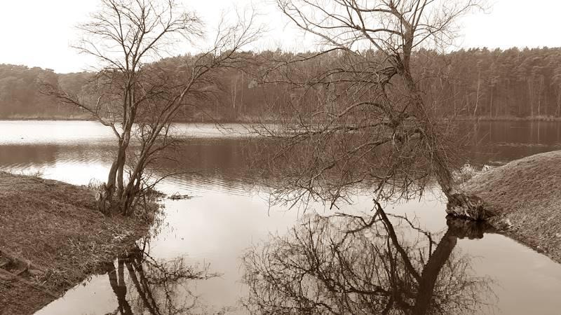 jezioro w soczewce wierzby