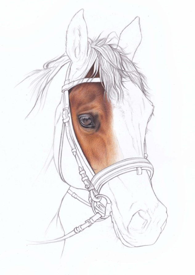 głowa konia rysunek kredkami