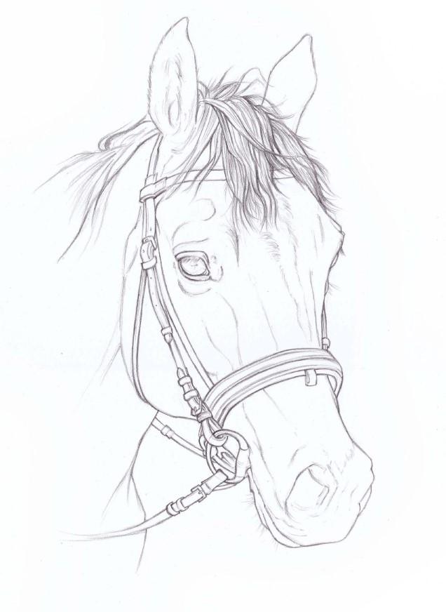 głowa konia szkic