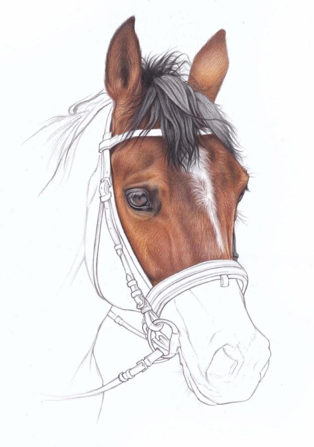 jak narysować konia kredkami