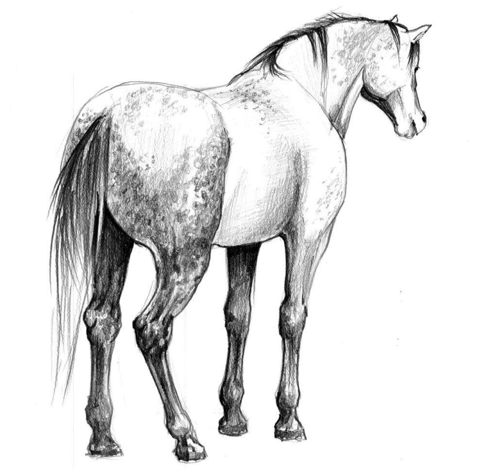 jak narysowac konia światłocień