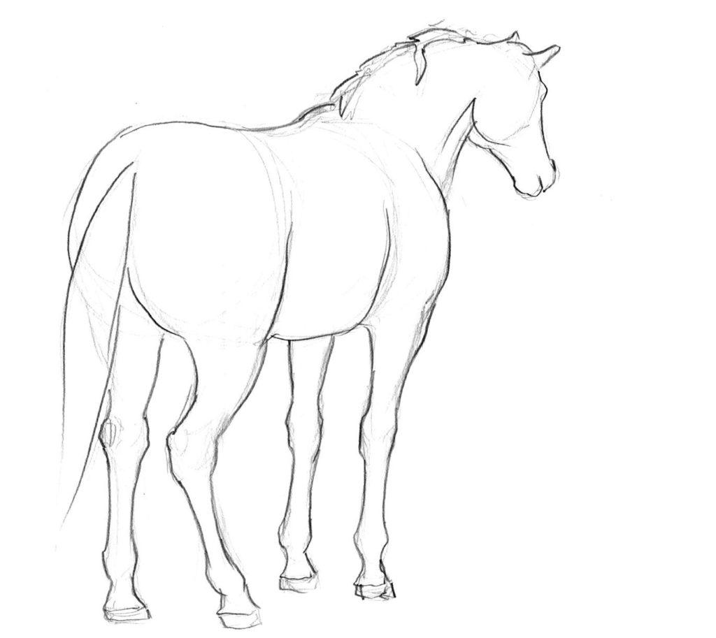 jak narysowac konia tyłem