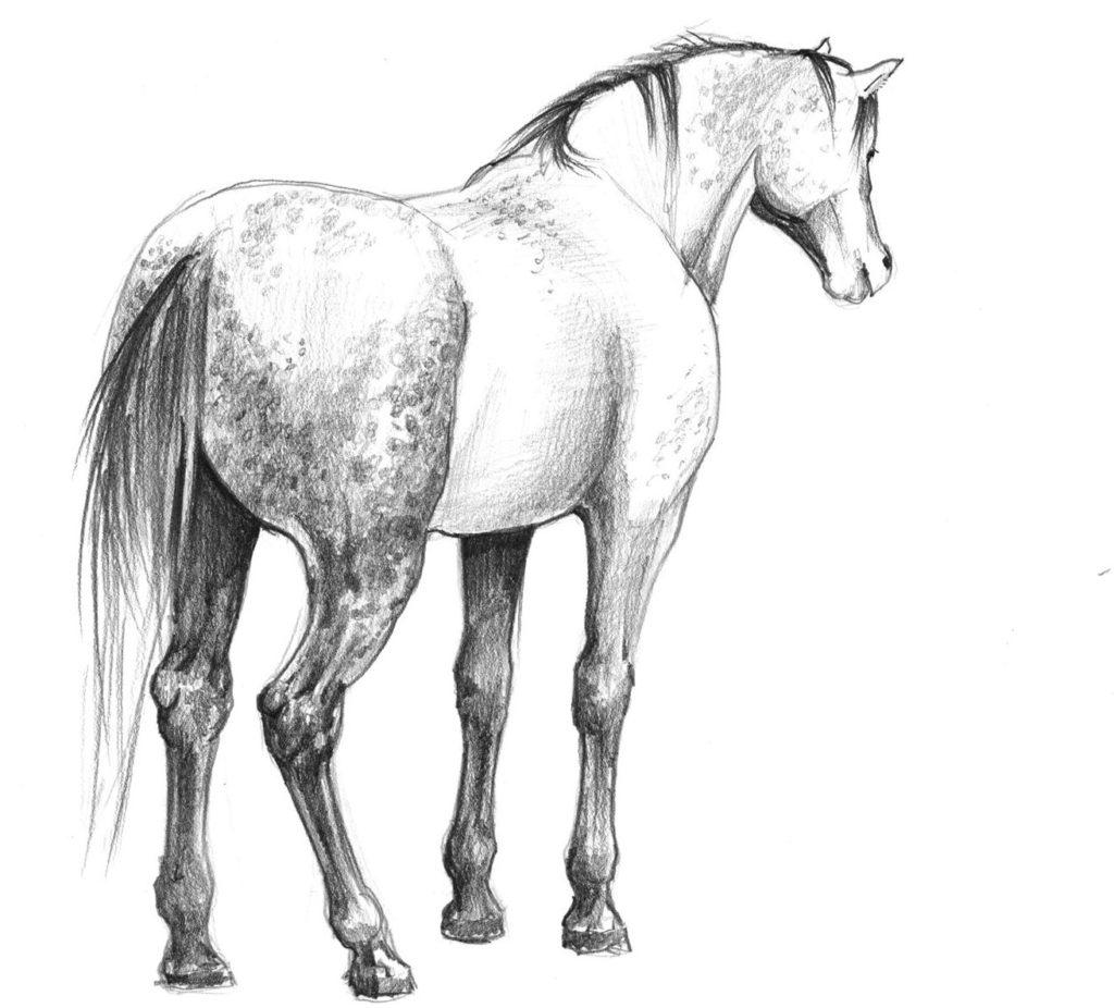 rysunek konia