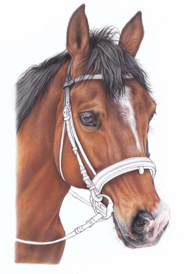 rysunek konia grzywa