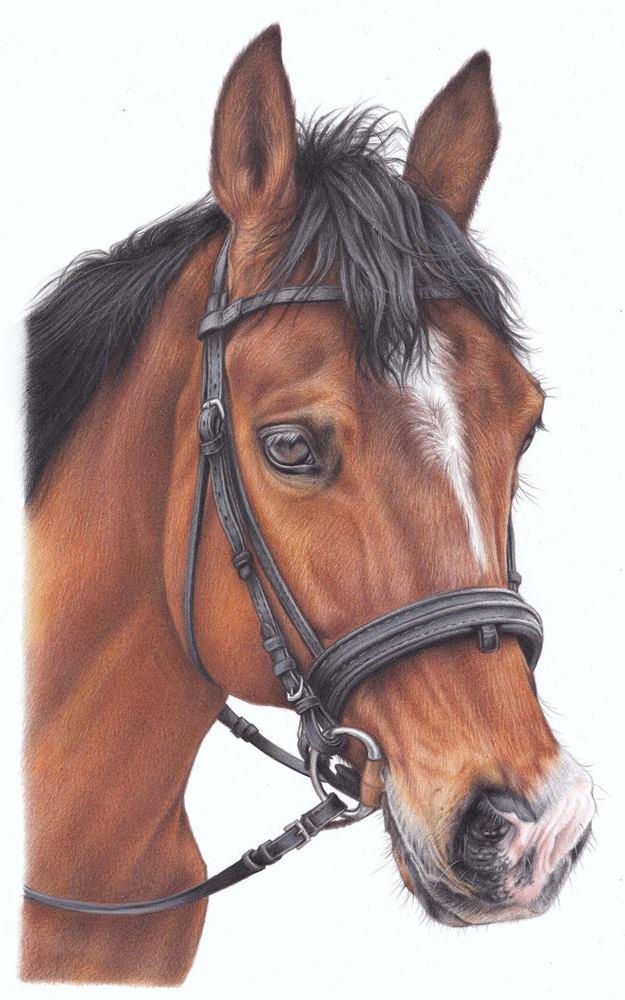 rysunek realistyczny głowa konia
