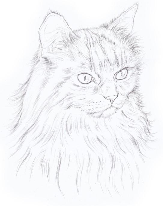 jak narysować kota tutorial