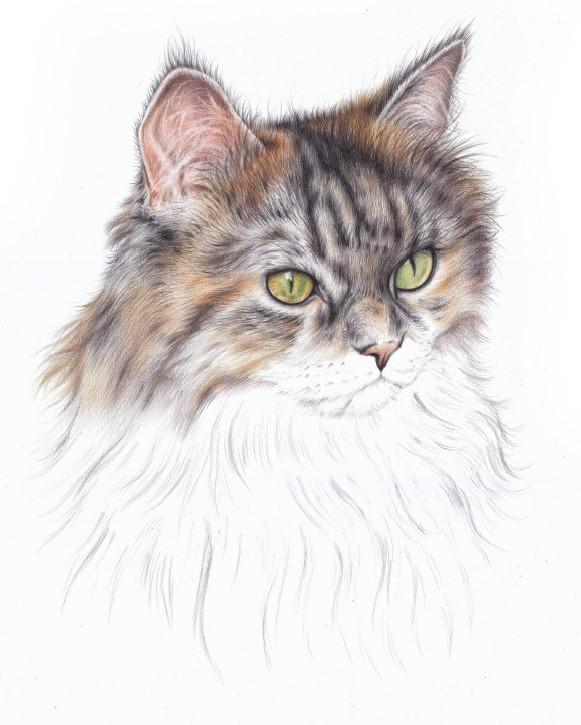 jak narysować nos kota
