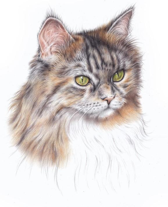 jak narysować pyszczek kota