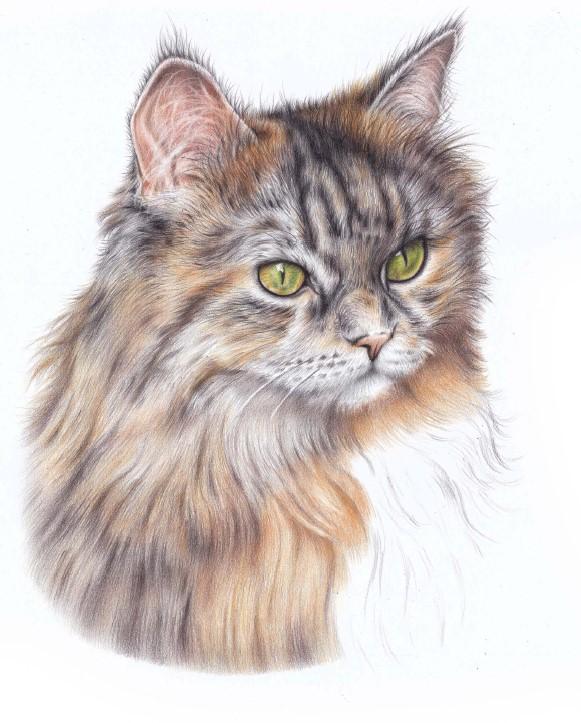 nauka rysunku sierści kota