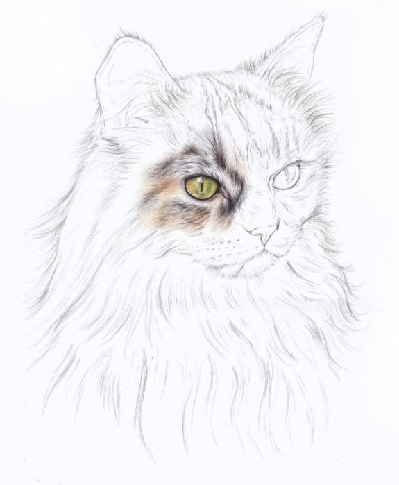 rysowanie kota dla dzieci